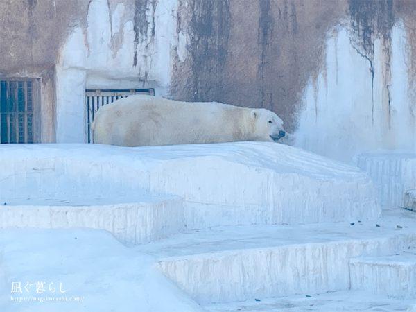天王寺動物園 しろくま