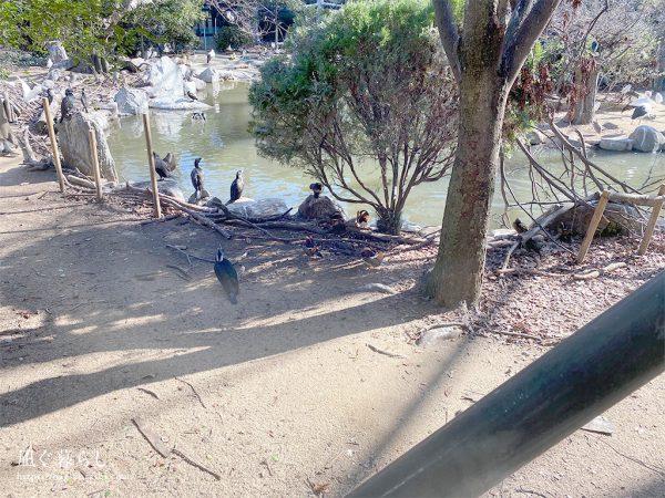 天王寺動物園 鳥