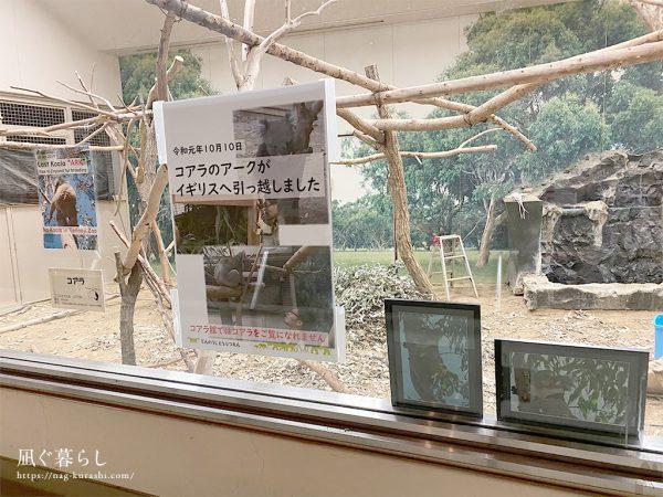 天王寺動物園 コアラ