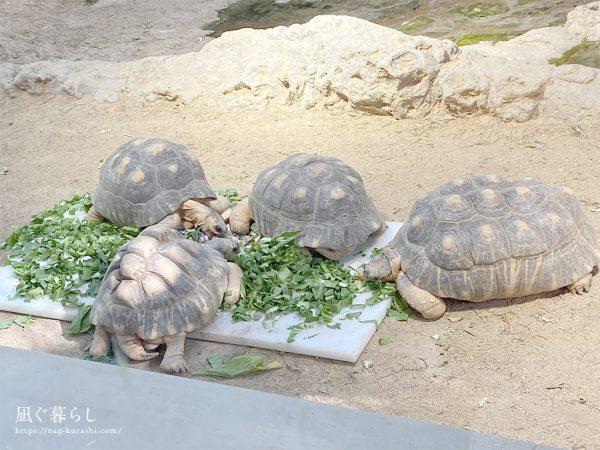 天王寺動物園 かめ
